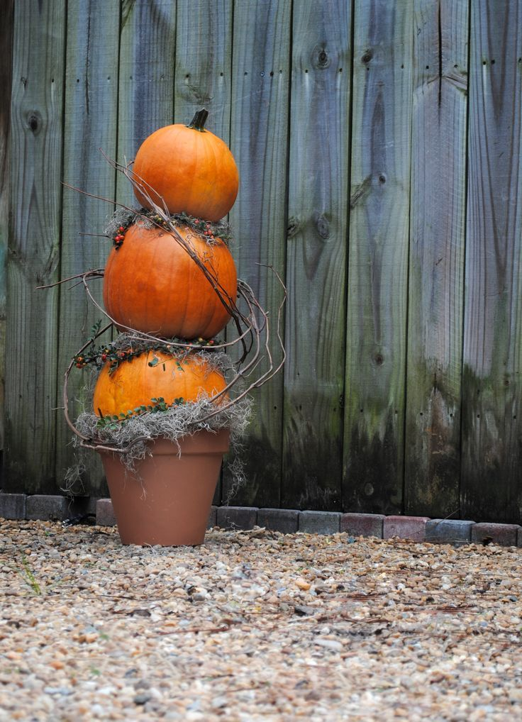 pumpkin-topiary